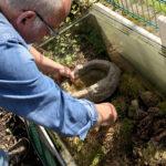 Im Garten hat Michael einige Außenterrarien für Eidechsen, Lurche und Wasserschildkröten aufgestellt.